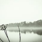 Misty Lake by redfibres