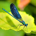 Colourful Dragonfly by benny2324