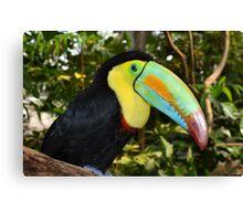 Rainbow Toucan Canvas Print