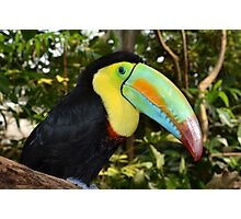 Rainbow Toucan Photographic Print
