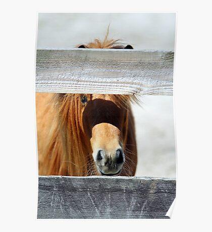 Mini Horsey Poster