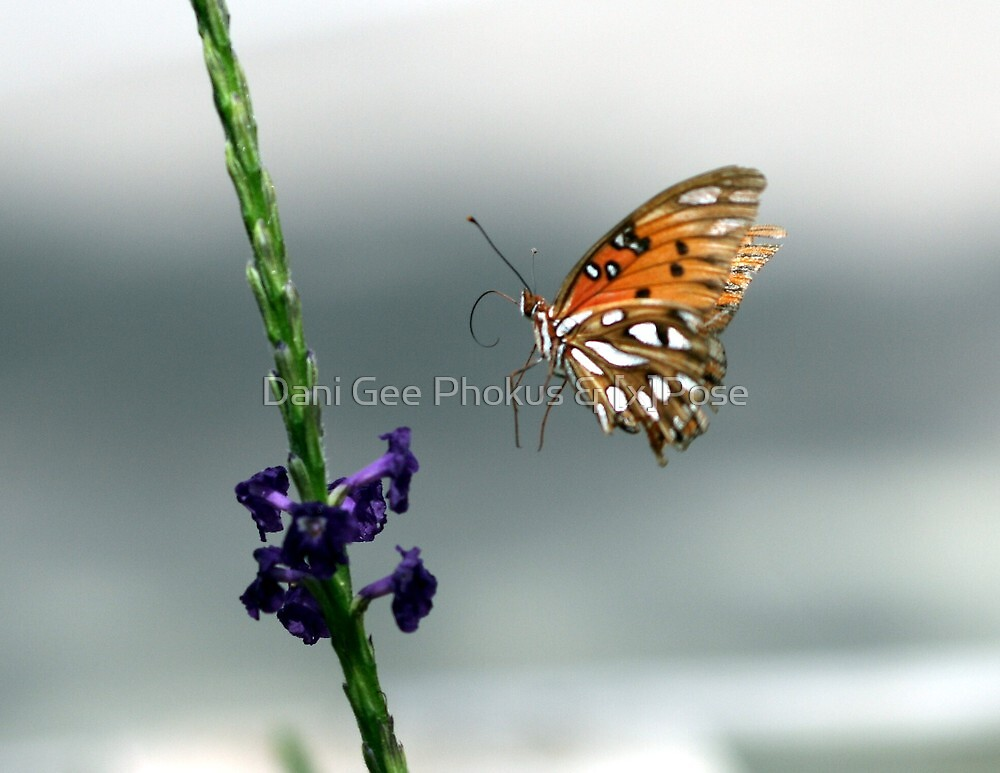 In Flight by Dani Gee Phokus & [x]Pose