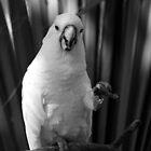 White Parrot Portrait by Dani Gee Phokus & [x]Pose