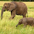 Elephants by Charuhas  Images