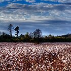 Cotton Fields Forever by Dani Gee Phokus & [x]Pose