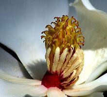 Magnolia by Dani Gee Phokus & [x]Pose