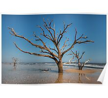 Botany Bay & Edisto Beach Poster