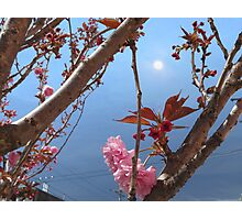 Full Moon Blossoms Photographic Print