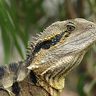 Lizard by HGMAGGIE