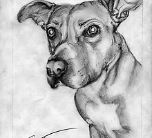 Layla the dog by Evelyn Wesley