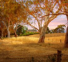 Dawsley II, Adelaide Hills SA by Mark Richards