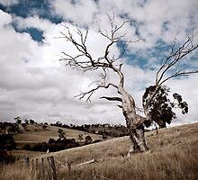 Greendale Australia by MickDavsonPhoto