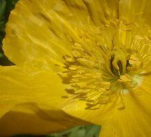 """Yellow """"Pop""""-pee by ShonaI"""