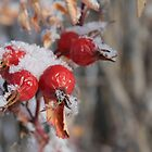 Frozen Hips by Kathi Arnell