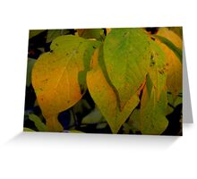 Golden Rays and Sunset Shadows Greeting Card