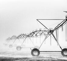 Dinosaurs in the Mist - Walwa Victoria (Monochrome) - The HDR Experience by Philip Johnson