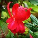 Firetruck Red - Fuchsia by EdsMum