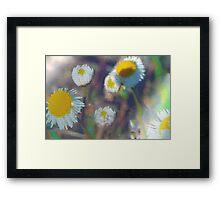 Crystal daisies Framed Print
