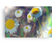 Crystal daisies Canvas Print