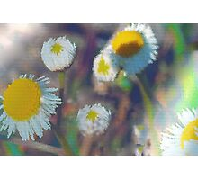 Crystal daisies Photographic Print