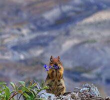 Helens Squirrel by JamesA1