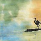 Great Blue Heron by xplor-r