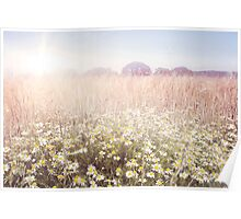 Sunshine over the Fields Poster