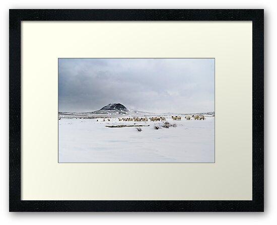 Slemish muntain , Ulster , Co Antrim , United Kingdom  by Zdrojewski