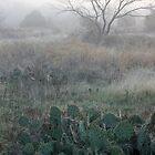 Misty Field by Paul Sturdivant