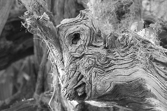 Unusual Tree Form by imagetj