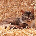 Farm Cat by redown