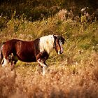A horse in the field by Ralph Goldsmith
