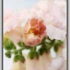 Snapdragon [iPhone-iPod case] by Susan Littlefield