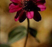 Zinnia by Susan Littlefield
