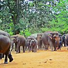 Jumbo traffic ahead (please see description) by Kanages Ramesh