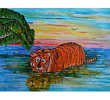 Tiger bathing at sunset Photographic Print