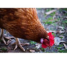 Rooster Photographic Print