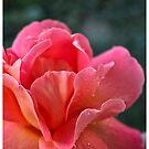 flower by marinagamu