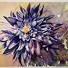 Chrysanthemum by Karl Fletcher