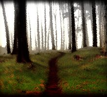 The Forest Path by Ben Wilson