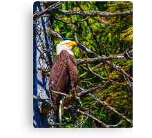 American Bald Eagle-Digital Oil Canvas Print