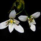 Dark Flower by WildestArt
