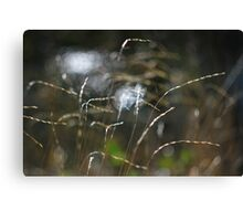 Grass with light and water Canvas Print