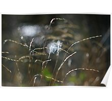 Grass with light and water Poster