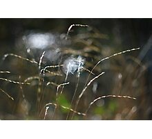 Grass with light and water Photographic Print