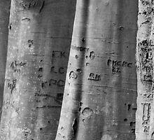 Tree trunks by Lugburtz
