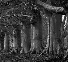 Trees in line by Lugburtz