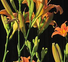 Day Lilies by Guy Ricketts