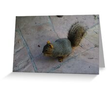 Fat Squirrel Eating a Nut Greeting Card
