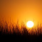 Sun Behind Grass by lindsycarranza